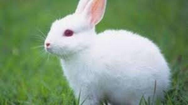 رؤيا الأرنب في المنام تشير إلى معاني رائعة تعرف عليها